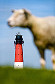 Sheep with lighthouse in background, Pellworm Island, North Frisian Islands, Schleswig-Holstein, Germany