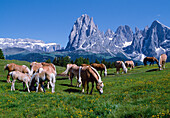 Horses on an alpine meadow under blue sky, Alpe di Siusi, South Tyrol, Italy, Europe