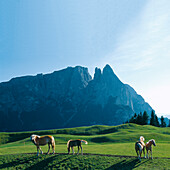 Horses on an alpine meadow in the sunlight, Alpe di Siusi, South Tyrol, Italy, Europe