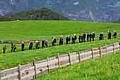 People processing over a meadow, Kastelruth, Valle Isarco, South Tyrol, Italy, Europe