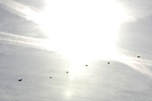 Backlit parachutists, South Tyrol, Italy, Europe