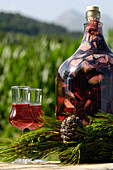 Home-made pine schnaps, liquor with pine cones, South Tyrolean speciality, South Tyrol, Italy