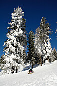 A child on a sledge, sledging down a slope, Fun in the snow, South Tyrol, Italy