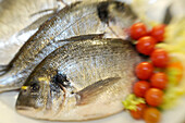 Fishes and tomatoes on a plate, Restaurant Da Cesare, Bozen, South Tyrol, Italy, Europe