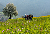 Four hikers with backpack on a flower meadow in the mountains, Völs am Schlern, South Tyrol, Italy, Europe