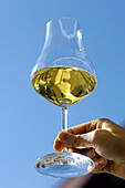 A hand holding a glass of white wine in front of blue sky, South Tyrol, Italy, Europe