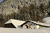 Snow covered farm house with barn in the sunlight, Kastelruth, Valle Isarco, South Tyrol, Italy, Europe