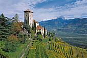 Schloss Lebenberg mit Weinreben, Weinanbau, Tscherms, Burggrafenamt, Südtirol, Italien