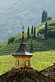 Vineyards and mountainous landscape, Manincor Winery, Kaltern an der Weinstrasse, South Tyrol, Italy