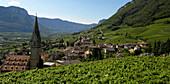 Reblandschaft mit Dorf und Kirche, Tramin an der Weinstrasse, Bozen, Südtirol, Italien