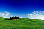 Cypresses on the horizon, Val d'Orcia, Tuscany, Italy, Europe