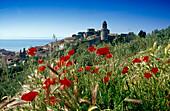 The coastal city Castiglione della Pescaia under blue sky, Maremma, Tuscany, Italy, Europe