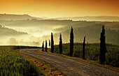 Landscape with cypresses in the morning mist, Val d'Orcia, Tuscany, Italy, Europe