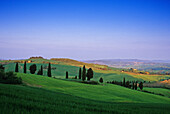Hügellandschaft unter blauem Himmel, Val d'Orcia, Toskana, Italien, Europa