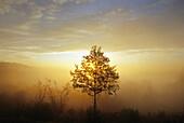 Morning mist, near Daun, Eifel, Rhineland Palatinate, Germany