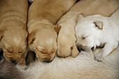 Animal, Animals, Baby animal, Baby animals, Color, Colour, Contemporary, Dog, Dogs, Domestic animal, Domestic animals, Feed, Feeding, Female, Females, Group, Groups, Mammal, Mammals, Mom, Mother, Mothers, Nourish, Nourishment, Nurse, Nursing, Nurture, Nur