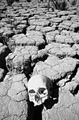 Arid, Aridity, B&W, Background, Backgrounds, Barren, Black-and-White, Close up, Close-up, Closeup, Crack, Cracked, Cracks, Cranium, Craniums, Daytime, Death, Desolate, Desolation, Detail, Details, Dread, Dried, Drought, Dry, Earth, Environment, Exterior,
