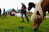 Icelandic horse near Geysir. Iceland.