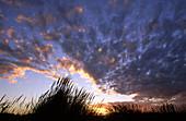 Grassy Sand Dune at Sunset, near Christchurch, Canterbury, South Island, New Zealand