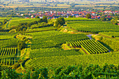 Vineyards at Königschaffhausen , Spring , Day , Kaiserstuhl , Baden-Württemberg , Germany , Europe