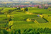 Weinanbau bei Königschaffhausen , Frühlingstag , Kaiserstuhl , Baden-Württemberg , Deutschland , Europa