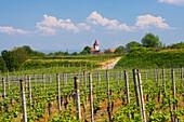 Weinanbau bei Königschaffhausen , Wolke , Frühlingstag , Kaiserstuhl , Baden-Württemberg , Deutschland , Europa