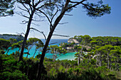 View through pine trees towards Cala Galdana bay with restaurant Mirador, Minorca, Balearic Islands, Spain