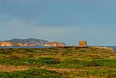 Landscape with old tower at Cap de Cavallaria, Menorca, Balearics, Spain