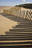 Stabilising sand Dunes at Holme N N R  Norfolk UK