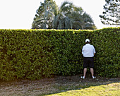 Adult, Adults, Alone, back view, break, break-time, breaks, Cap, Caps, Color, Colour, Contemporary, Daytime, exterior, Full body, Full length, Full-body, Full-length, Golf course, Golf courses, Hat, Hats, Headgear, Hedge, Hedges, human, Male, Man, Men, On