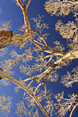 Branches, California, Color, Colour, Morongo, North America, Palm Springs, Sky, Trees, Usa, Valley, G34-807086, agefotostock