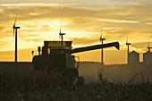 Grain combine harvests corn with a backdrop of wind generators, grain bins, and setting sun near Williams, Iowa, USA