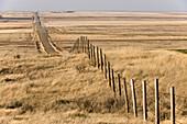 Alberta prairie in early spring