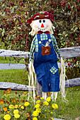 A fall seasonal yard scarecrow at the Dakin Farm in South Burlington, Vermont, USA
