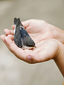 Alt Millars, Alto Mijares, Animal, Animals, Bird, Color, Colour, Comunidad Valenciana, Contemporary, Europe, Hands, Ludiente, Protection, Spain, L51-762893, agefotostock