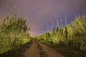 Color, Colour, Comunidad Valenciana, Dexeraco, Europe, Jeresa, Landscape, Marjal, Nature, Night, Outdoor, Spain, Valencia, Water, Wetland, Xeraco, Xeresa, L51-762914, agefotostock