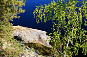 Shore of an uninhabited island in the sunlight, Saimaa Lake District, Finland, Europe