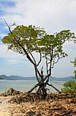 Mangrove on an uninhabited island under clouded sky, Mergui Archipelago, Andaman Sea, Myanmar, Burma, Asia