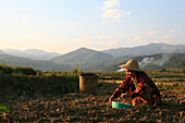 Shan woman working on the field in the evening, Hispaw, Shan State, Myanmar, Burma, Asia