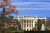 View of the South Lawn of the White House surrounded by cherry blossoms, Washington D C, U S A