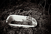 Abandoned, Abandonment, Aged, b&w, Bathtub, Bathtubs, black-and-white, Careless, Carelessness, Concept, Concepts, Country, Countryside, Earth, exterior, forest, forests, Ground, Grounds, Nobody, Odd, Old, Out of place, outdoor, outdoors, outside, Strange,