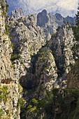 Desfiladero del Cares. Picos de Europa. Asturias. España.