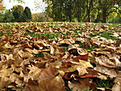 autumn, autumnal, Color, Colour, Country, Countryside, Covered, Daytime, exterior, fall, Fallen leaves, Grass, Ground, Grounds, Lawn, Leaf, Leaves, nature, outdoor, outdoors, outside, Park, Parks, scenic, scenics, Season, Seasons, Surface, Surfaces, S60-7