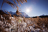 Dry grasses in snow, Karwendel range in background, near Kruen, Bavaria, Germany