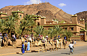 Tourists riding camels on a street at Zagora, Draa valley, South Morocco, Morocco, Africa