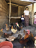 HONDURAS  Single mother and her children with their chickens  These were provided by a project to raise nutrition levels in the rural areas  Marcala