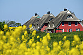 D, Germany, Europe, Mecklenburg Western Pomerania, Baltic Sea, Fischland, Darss, Ahrenshoop, Spring, Springtime, Village, Cottage, Thatched Roof, Holiday Houses, Holiday House, Colored, Rape, Rape Field