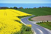 D, Germany, Mecklenburg Western Pomerania, Rügen, Ruegen, Isle, Baltic Sea, Jasmund, Landscape, Nature, Spring, Springtime, Rape, Rape Field, Viewpoint, Street, Sea