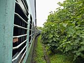 Train, Railway is passing on railway track  Satpuda Ghat, Madhyapradesh, India