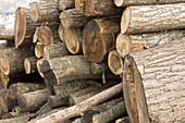 Abundance, Abundant, Color, Colour, Concept, Concepts, Daytime, Deforestation, detail, details, Environment, exterior, Firewood, Heap, Heaps, Log, Logging industry, Logs, Lumber, Lumber industry, Natural resource, Natural resources, outdoor, outdoors, out